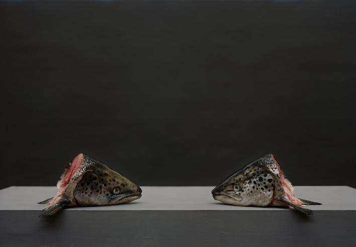 OR_Fish_02.tif