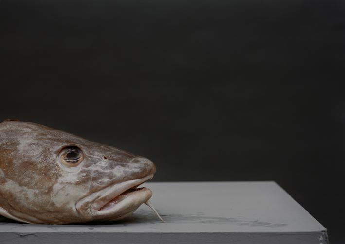 OR_Fish_01.tif